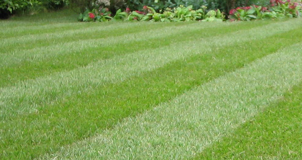 Caring for Your Lawn in the Extreme Heat!