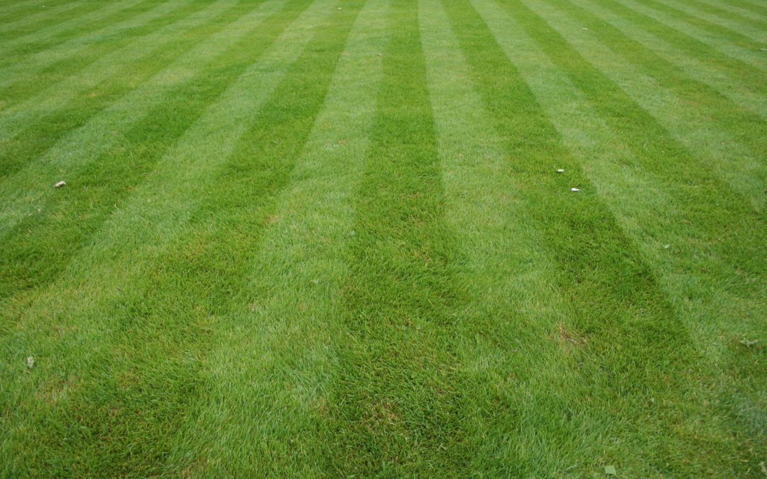 Caring for your Grass in Extreme Heat