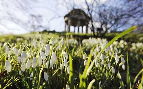 February Gardening Tips for the South
