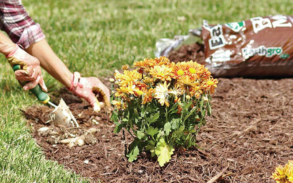 Truth or Myth on Spring Planting